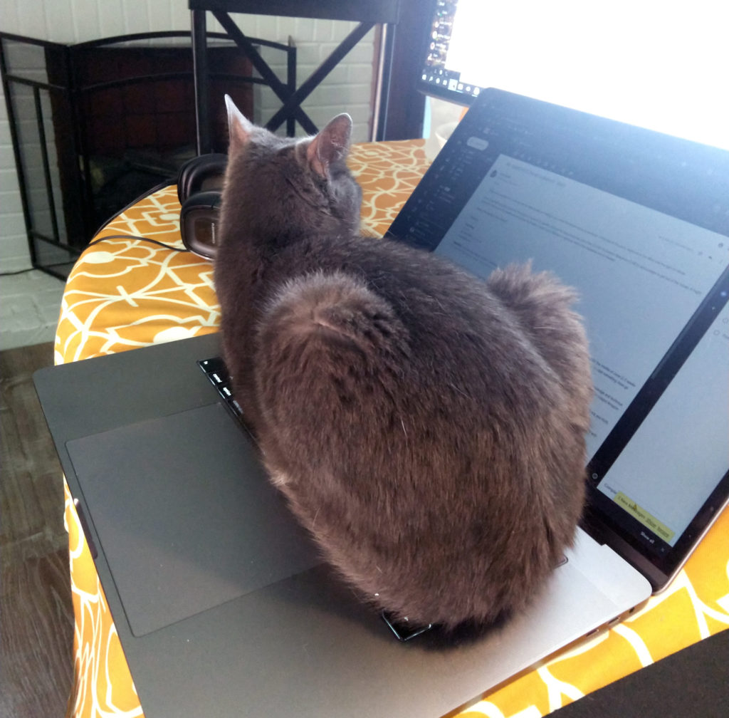 Lead Designer Chris Stygar's beautiful gray kitty uses his laptop as a nice, warm seat.